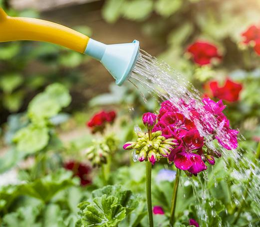Arrosage des pelouses, jardins, fleurs et arbustes