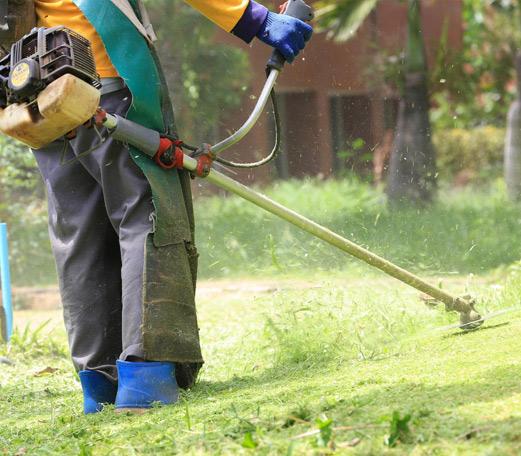 Débroussaillage et nettoyage de terrain